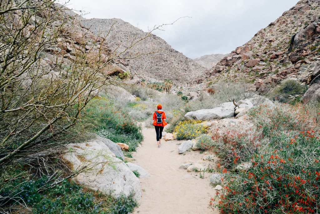 Anza Borrego Weekend Guide: Experience the Super Bloom